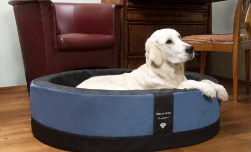 Der Hundekorb Paddy Style – dekorativ und XXL-bequem