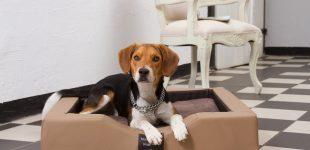 GEL-Hundebett. Das beste Hundebett aus der Hundebettenmanufaktur!