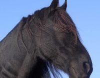 Führungskräftetraining und Teamentwicklung mit Pferden