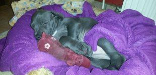 Grippewelle macht auch vor  Haustieren nicht halt