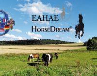 Pferdegestützte Aus- und Weiterbildung