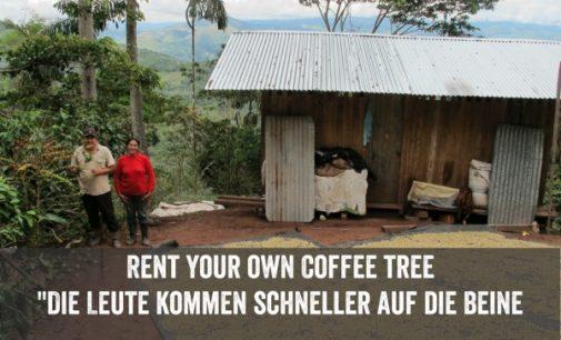 Der Wertgutschein: Ticket für den eigenen Kaffeestrauch