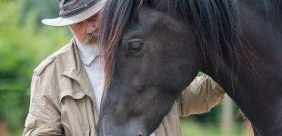 Was ist Pferdecoaching?