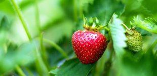 Frische Früchte für Zuhause