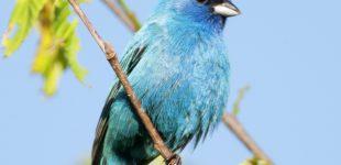 Neues Paradies für Vogelliebhaber in Illinois