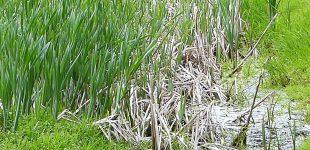 Umweltprojekt rettet See und ermöglicht die Gewinnung eines hocheffizienten Bio-Düngers