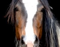 HorseDream. Ein unglaubliches Lernerlebnis.