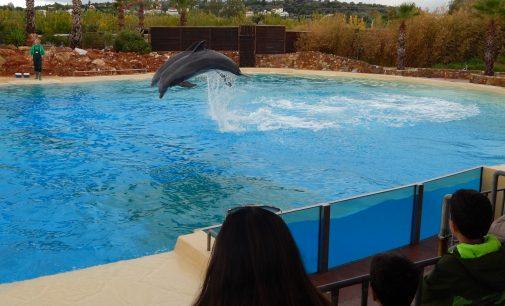 Delfinschutz-Demo mit Europaparlamentarier und deutschen Tierschutzorganisationen in Athen