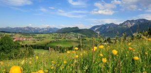 Grüne Kraft tanken: Auf Kräuterwanderung in Pfronten