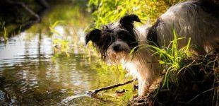 Im Frühling macht die Liebe Haustiere blind