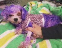 Gefährlicher Trend: Fellfärben bei Haustieren