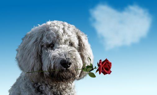 Valentinstag: Love-Domains als Geschenk