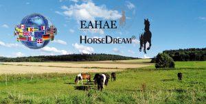 HorseDream Seminarpferde auf der Koppel