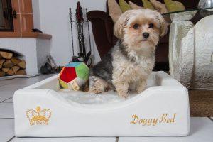Kleine orthopädische DoggyBed