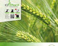 Pflanzenbau: Schwerpunktprogramme der AGRAVIS Raiffeisen AG