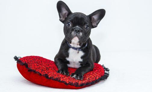 Exklusive Hundekissen in hochwertiger Qualität