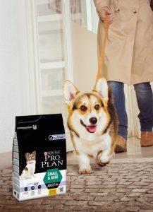 Purina PRO PLAN verstärkt Angebot für ältere Hunde kleiner Rassen.