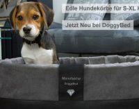 Exklusive Hundekörbe für elegante Hunde