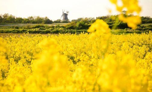 Deutschlands schönste Ölfelder blühen wieder!