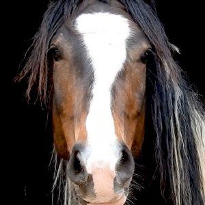Feedback vom Pferd: ehrlich und ohne Hintergedanken.