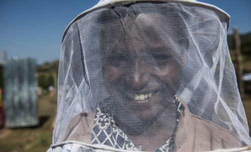 Weltbienentag: Wie Honigbienen Jobs in Äthiopien schaffen