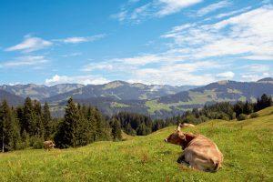 Heumilchkäse: Naturnah, nachhaltig und regional, und zwar von der Wiese bis zum Teller.