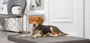 Exklusive Hundematten mit Kunstleder