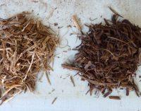 ?Neues Trocknungs-Verfahren macht Holz für die Industrie interessant