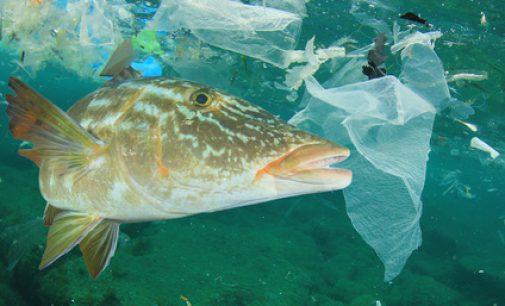Einmalplastik vermeiden – Plastikmüll in den Ozeanen