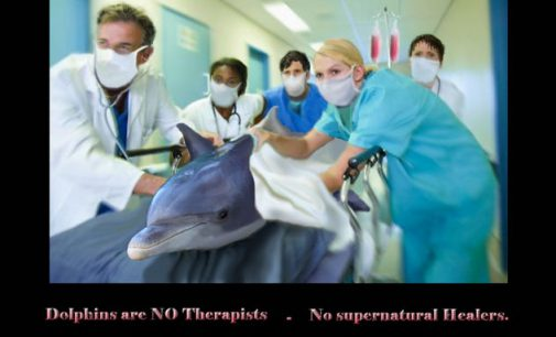 """Tierschützer warnen vor Delfintherapie – Abzocke"""" von Anbietern"""