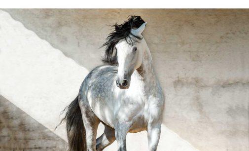 """Training mit Pferden auf der """"Zukunft Personal"""": Vom Know-how zum Do-how"""
