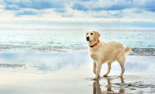 Urlaub mit Hund Ferienhäuser Strandhäuser und Reethäuser am Meer eingezäunt, Wir mögen Hunde, Strandpfotenquartiere am Meer, Bitte Hund mitbringen