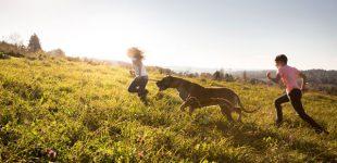 Hundeernährung – Die Natur als Vorbild.
