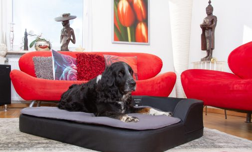 Exklusive Hundekissen, orthopädisch mit Kuschelfaktor