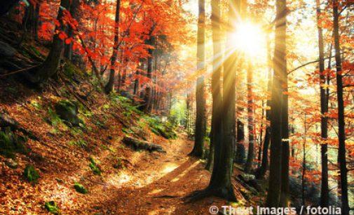 Resilienz-Coaching gegen den Herbstblues