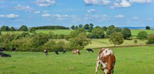 Rinder können nicht für menschengemachten Klimawandel verantwortlich sein
