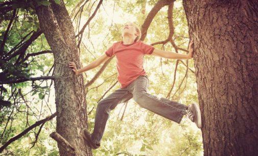 SAUBER ENERGIE Waldpreis 2020: Schule in Kirchhundem gewinnt mit Walderlebnispfad