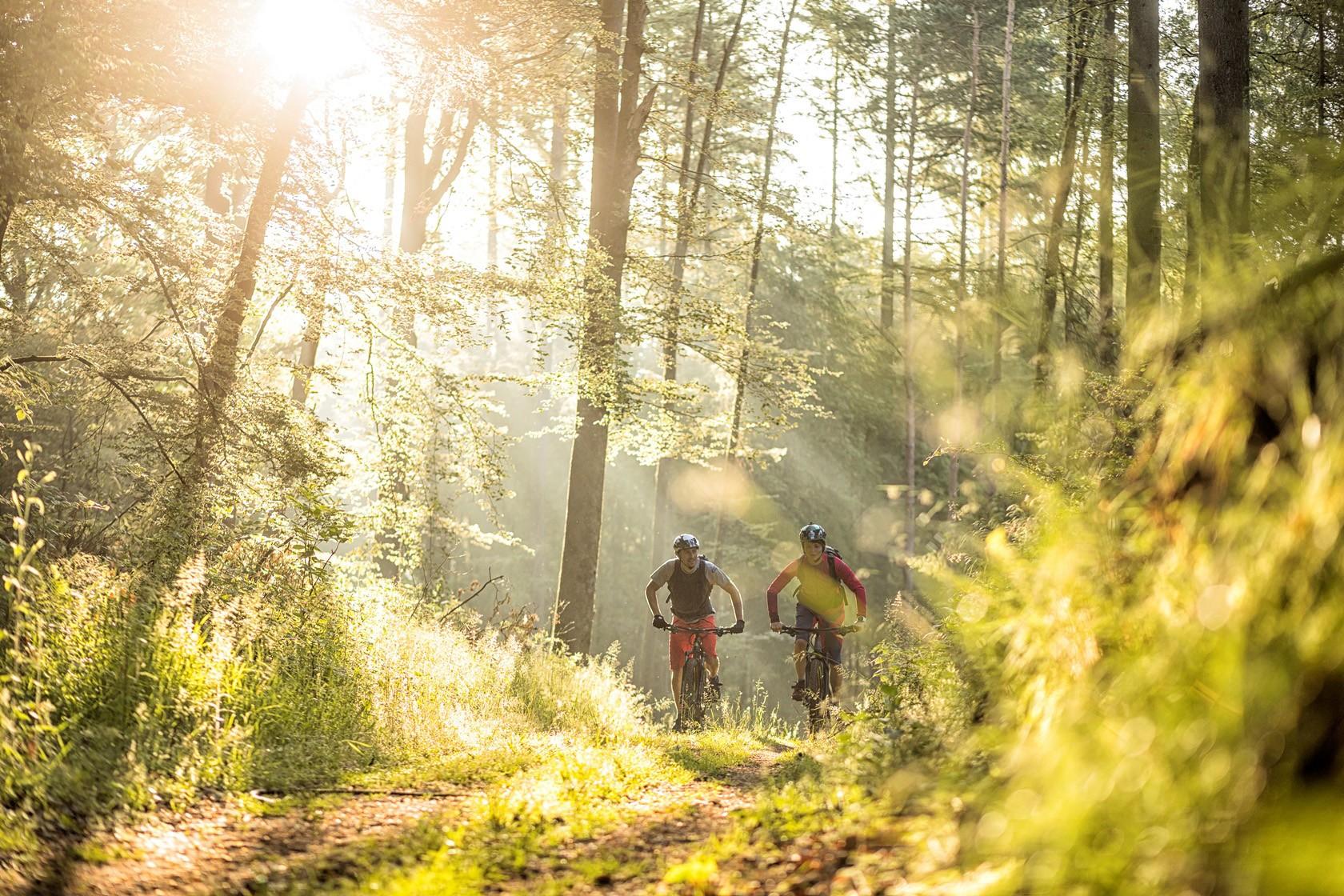 Beste Bedingungen für Mountainbiking