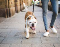 Hundehaufen auf dem Gehweg – Verbraucherfrage der Woche der ERGO Rechtsschutz Leistungs-GmbH