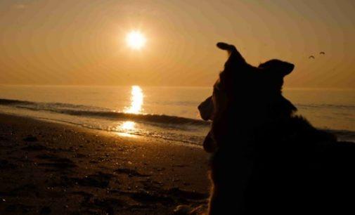 Bund Deutscher Tierfreunde gibt Tipps zu Ferien mit Hund