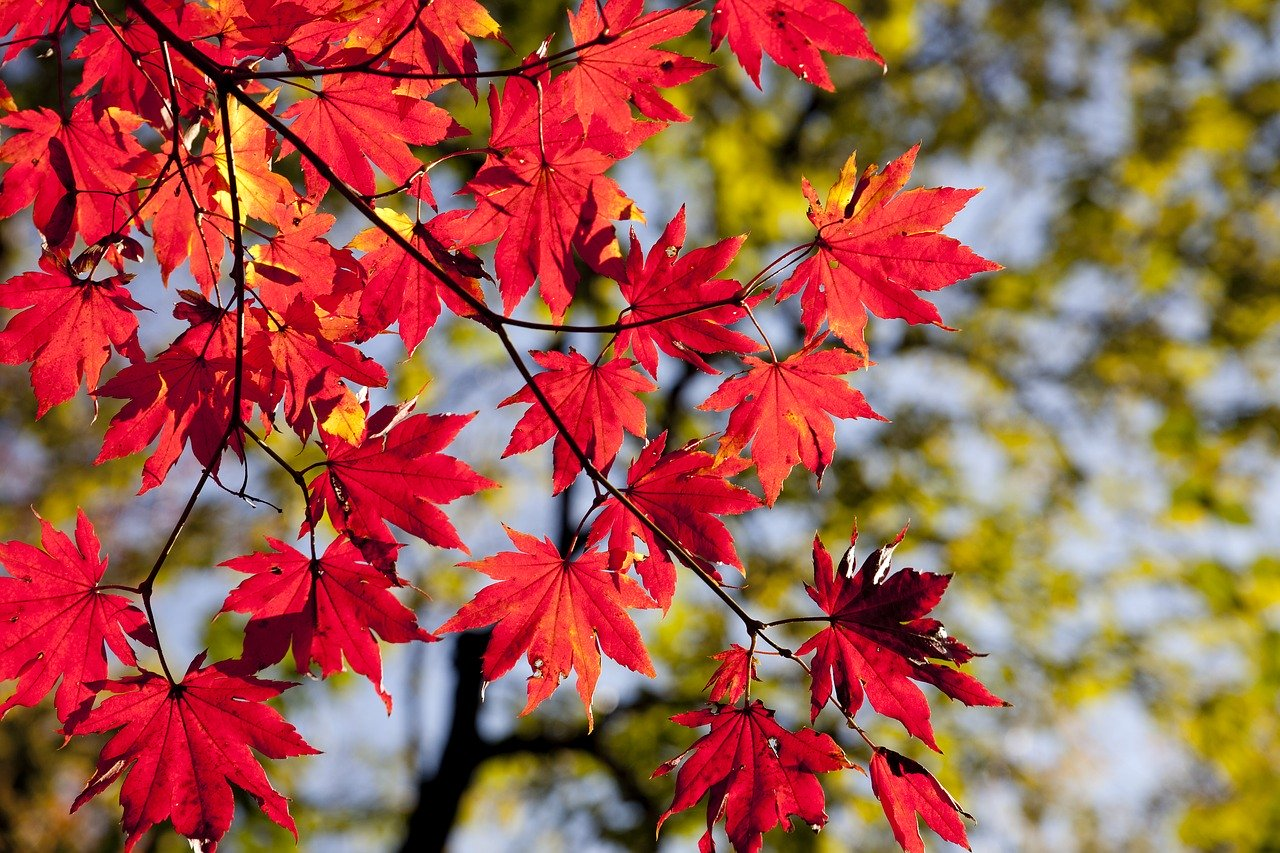 Herbst - Ayurveda stärkt