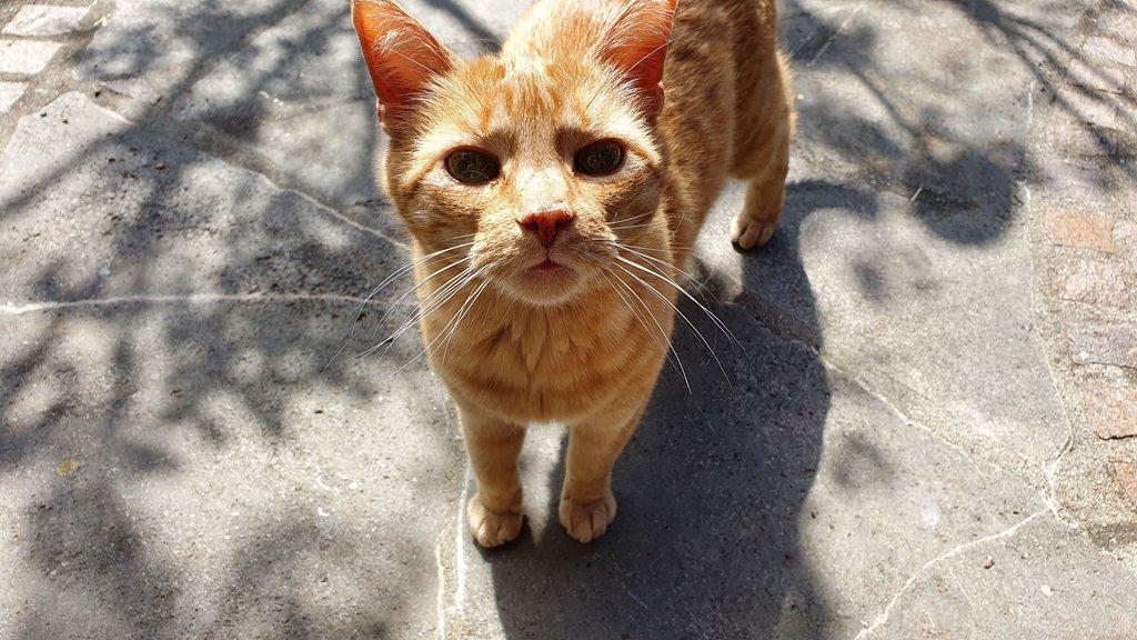 Katzen - das beliebteste Haustier in Mietwohnungen