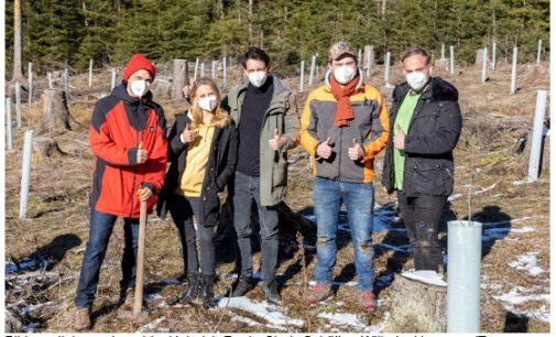 CAPANOVA unterstützt Aufforstungsprojekt im mittelhessischen Taunus