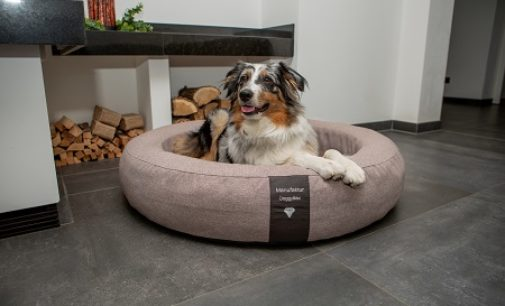 Der optimale Hundeschlafplatz für den Hund