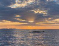 Wale zieht es zum Capo Sant'Andrea