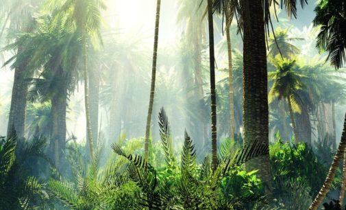 Nachhaltig zertifiziertes Palmöl stärkt Klimaschutz