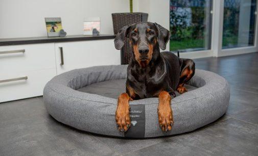 Exklusive Hundebetten – orthopädisch und elegant
