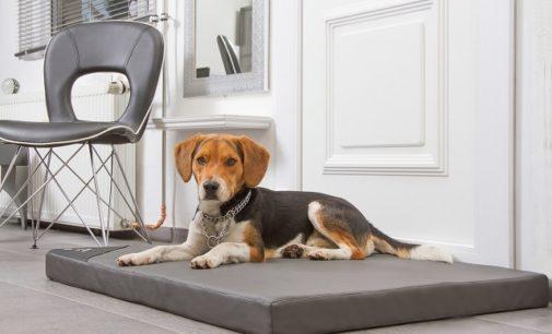 Einen Hund ins Büro mitnehmen – sinnvoll oder nicht