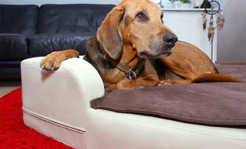 Gesunde Hundekissen – HD bei Hunden jetzt vorbeugen!