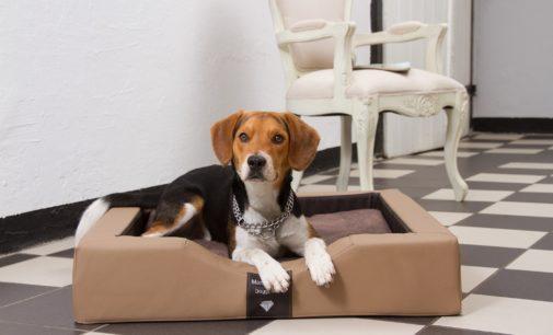 Das ultimative Hundebett für gesunde und erkrankte Hunde